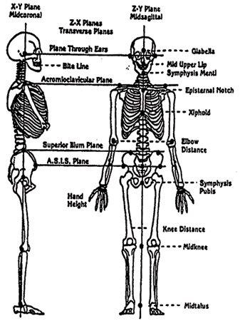 Posture Figure A